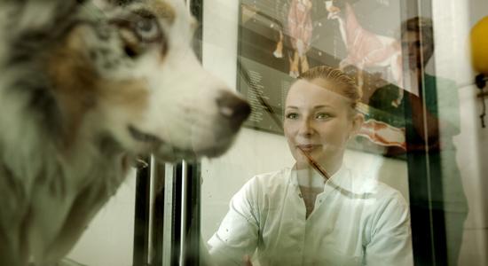 School of Veterinary Medicine and Animal Sciences