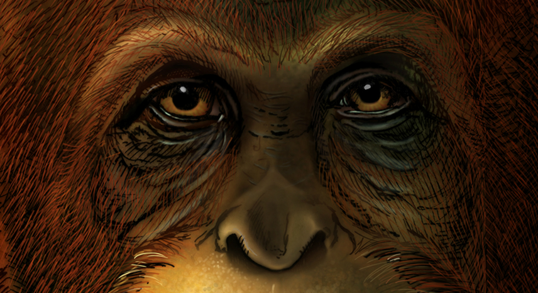 Gigantopithecus Blacki illustration