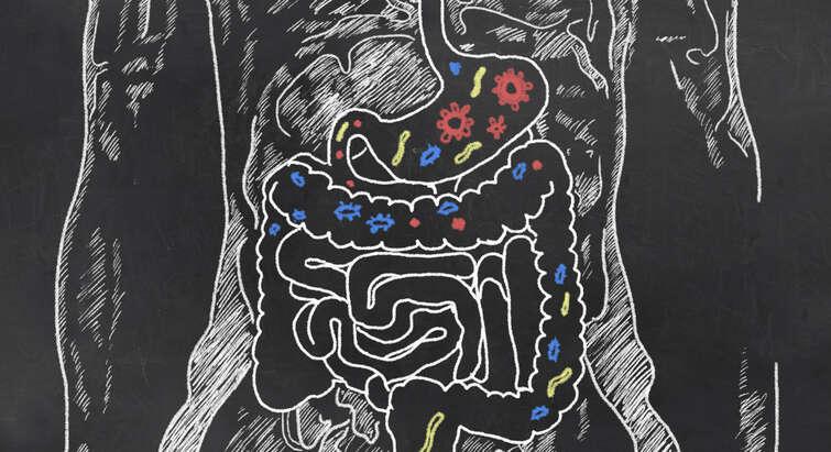 Tegning af tarme